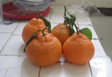 How to Store Mandarins
