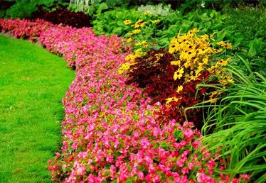 How to Plant Borders & Flower Beds