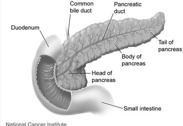 How Long on Average Do People With Pancreas Cancer Live?
