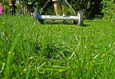 Where Can I Buy a Cheap Lawn Roller?