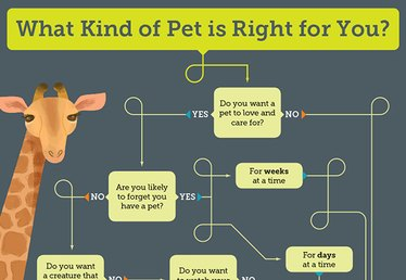 What Kind of Pet Is Right For You?