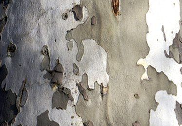 How to Make Birch Bark Paper