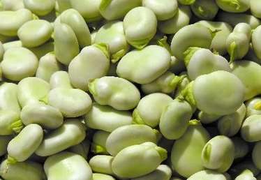Health Benefits From Broad Beans