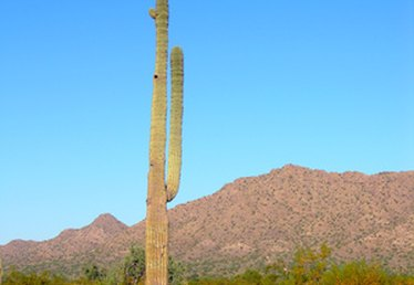 The Average Monthly Temperature in the Sonoran Desert