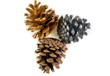 How Can I Sell My Pine Cones?