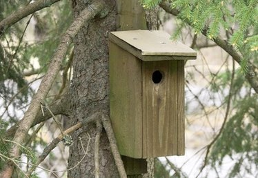 How to Build a Simple Birdhouse