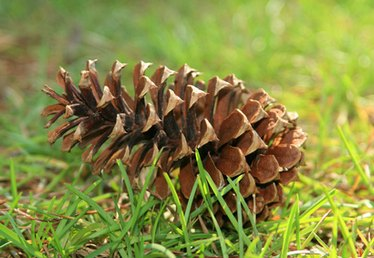 Crafts with Pine Cones