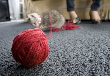 How to Make an Yarn Ball for Cats