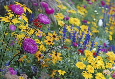 Perennials That Bloom All Spring and Summer
