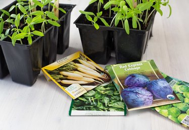 How to Grow Seeds Indoors Without Soil