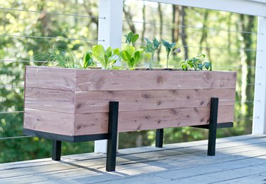 How to Build and Grow a Salad Garden On Your Balcony