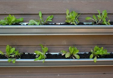 How to Grow Lettuce on a Wall