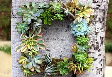 Easy to Make DIY Living Succulent Wreath