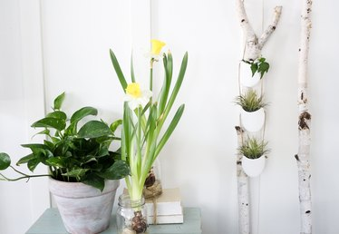 Make Your Own Modern DIY Hanging Planter