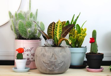 How to Make Pumpkin Concrete Planters