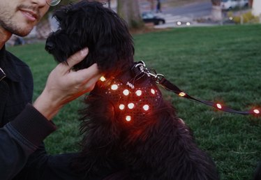 DIY LED Dog Vest with Leash