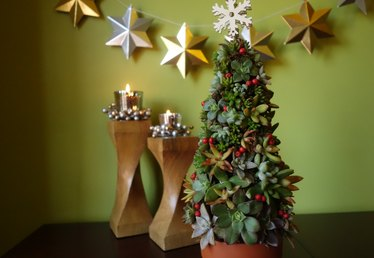 Create a Living Succulent Christmas Tree Tutorial