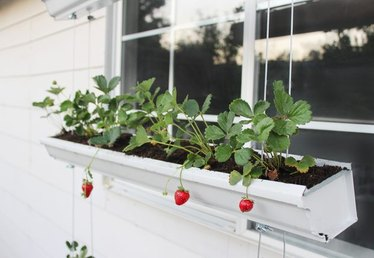 How to Build a Hanging Strawberry Planter