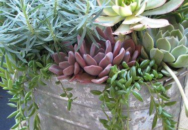 Miniature Landscaping: Ideas for Container Gardens