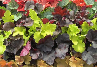 Get the Most Color Out of Your Garden