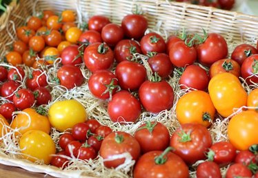 Picking the Right Tomato Seeds for Your Garden