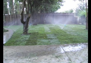 What to Do After Laying Sod