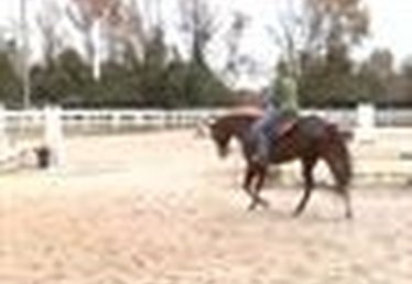 How to Canter a Horse