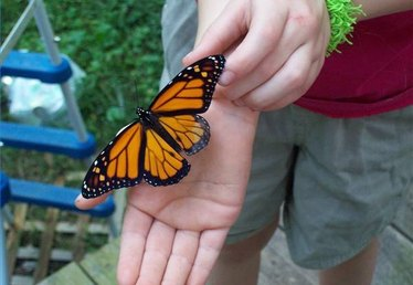 How to Create a Monarch Waystation