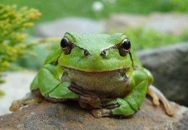 How to Build a Frog Pond in the Backyard