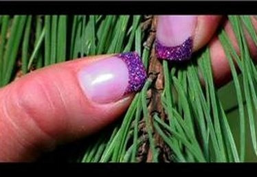 How to Prune Pine Trees