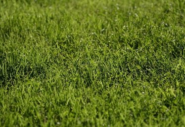 How to Remove Dog Urine From Turf