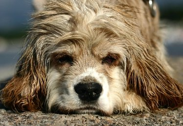 Nutrition for Dogs With Dry Hair