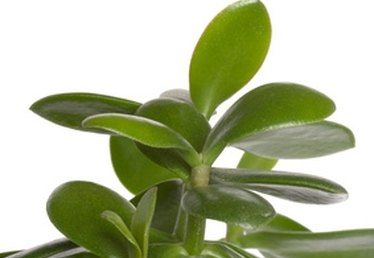 How to Identify Small Leaf House Plants