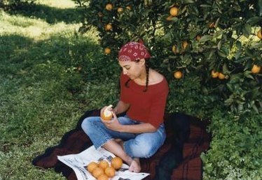 Where Can You Pick Oranges Near Orlando, Florida?
