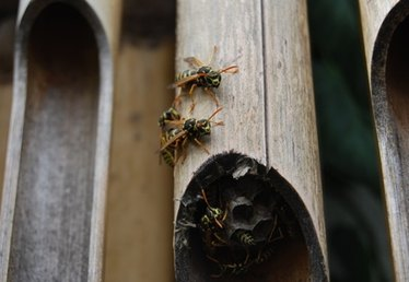 How to Kill Carpenter Bees & Wasps