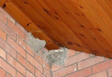 How to Stop Cliff Swallows From Nest Building on Your House