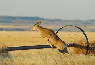 Effective Height for a Deer Fence