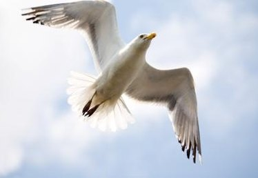 How to Get Rid of Seagulls on Your Home