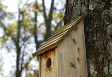 What Kind of Birdhouses for Colorado?