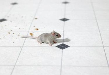 Effective Ways to Kill Mice Using Green Pellets