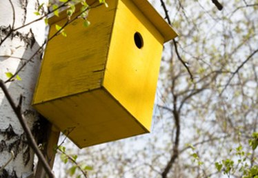 How to Keep Wasps Out of Birdhouses