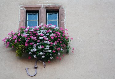 The Best Flower Annuals for a Window Box