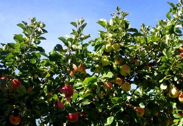 Fruit Trees That You Can Grow in Nebraska
