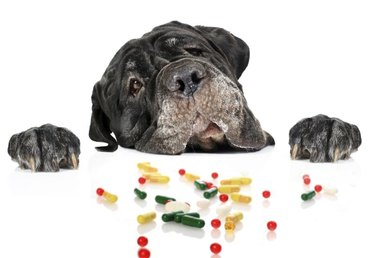 How to Give a Dog Pills