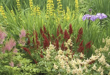 What Is a Herbaceous Perennial?