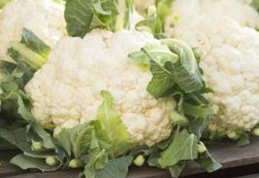 Insects That Eat Cauliflower