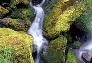 Precautions With Ferrous Sulfate & Iron for Moss
