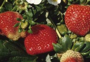 How Long for Flowers to Become Strawberries?