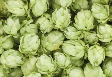 How to Plant Barley & Hops for Beer-Making
