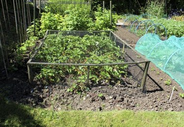 Netting to Cover Garden Plants